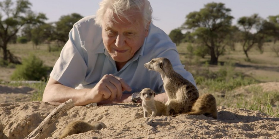 Bbc S Planet Earth Ii Hopes To Tame North America With Six